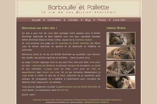 Barbouille-et-Paillette : British shorthair
