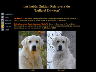 Au Mas de l'Orb - Elevage de golden retrievers - Goldens34.free.fr