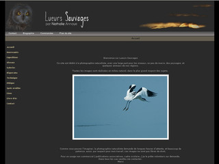Lueurs Sauvages - Photographie animaliere