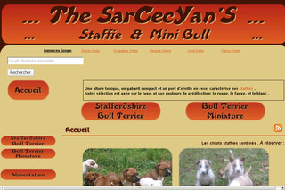 The SarCecYan'S: Staffie et Mini bull-élevage de terriers type bull